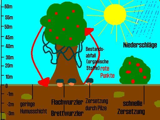 Der regenwald und sein gro es problem for Definition von boden